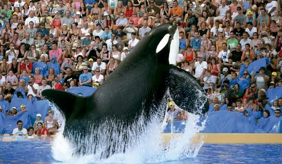 Loro Parque Tickets and Entrance Fees