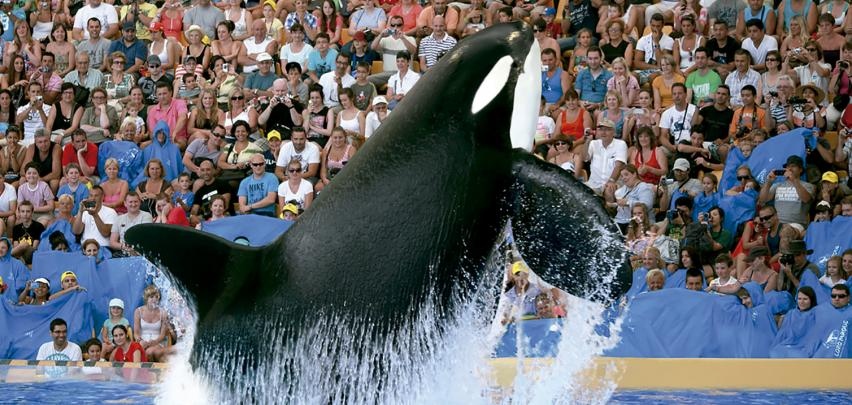 Loro Parque Tickets Online: Prices and offers | Volcano Teide